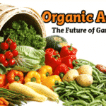 Hot! Moolala.com Deal on Organic Herbs & Veggies! Only $19!