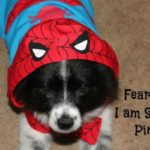 Closed-Petsmart Is Our One Stop Shop For Halloween! & A #Giveaway #HalloweenGuide #Feature