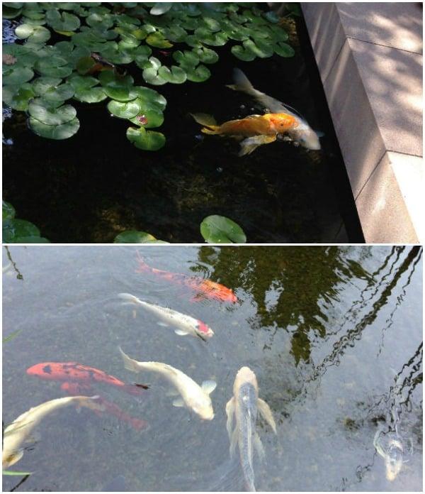 fishdreamworks