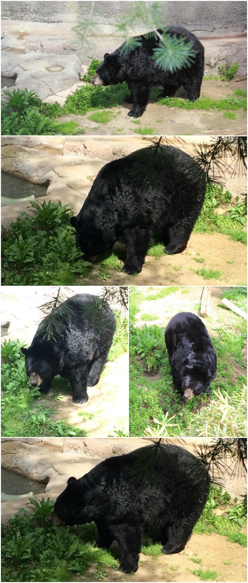 bear-la-zoo