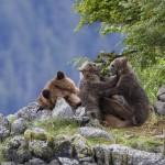Our Thoughts On Disneynature Bears! #DisneynatureBears