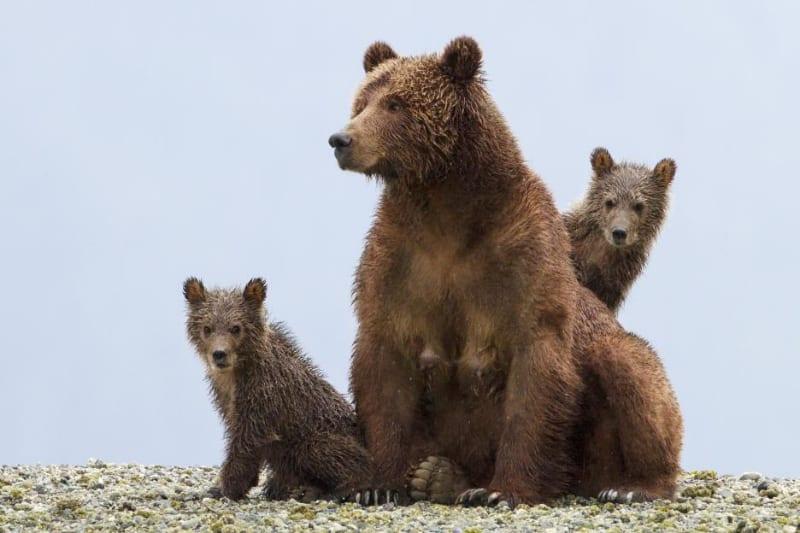 bears5346e4ab0fcd0