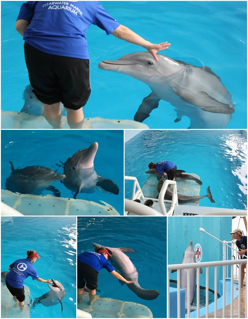 Winter and the dolphins at the aquarium are very well trained and