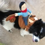 This Years Best Halloween Costumes For Dogs!