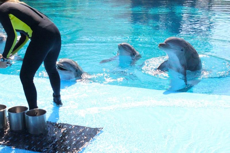 Dolphin-Experience-1