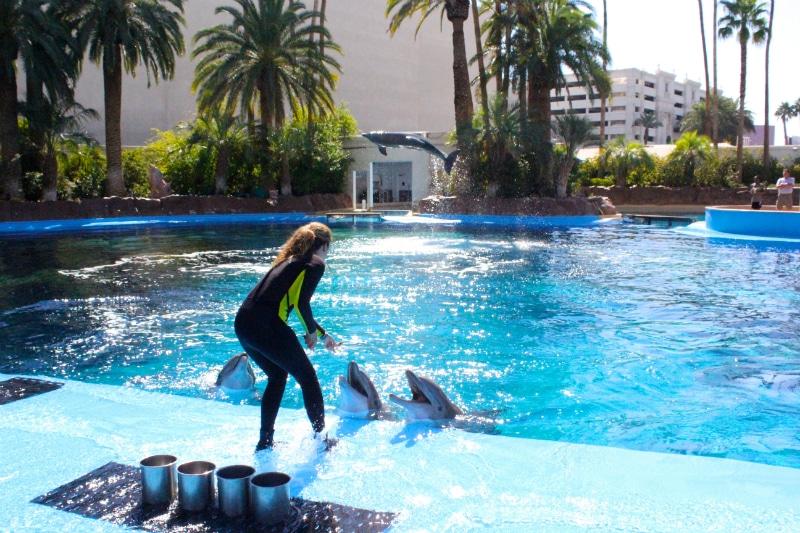 Dolphin-Experience-2