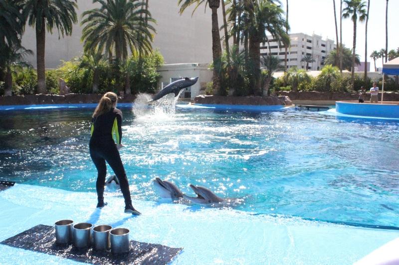 Dolphin-Experience-3