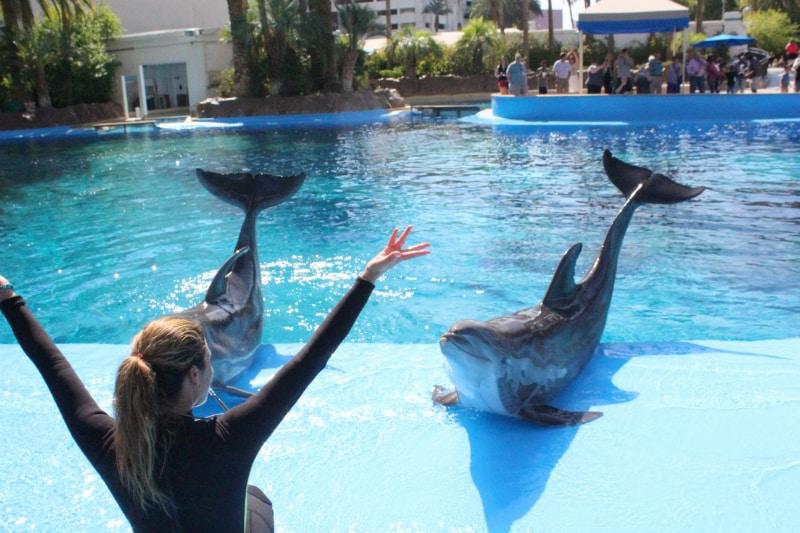 Dolphin-Experience-4