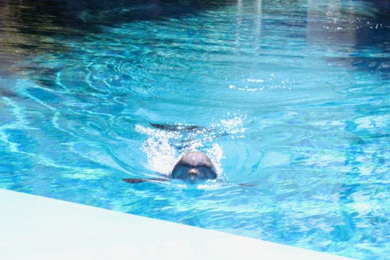 Dolphin-Experience