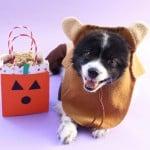 Easy DIY Halloween Dog Treats Bag!