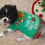 Holiday Fun With PetSmart! #HolidayGiftGuide