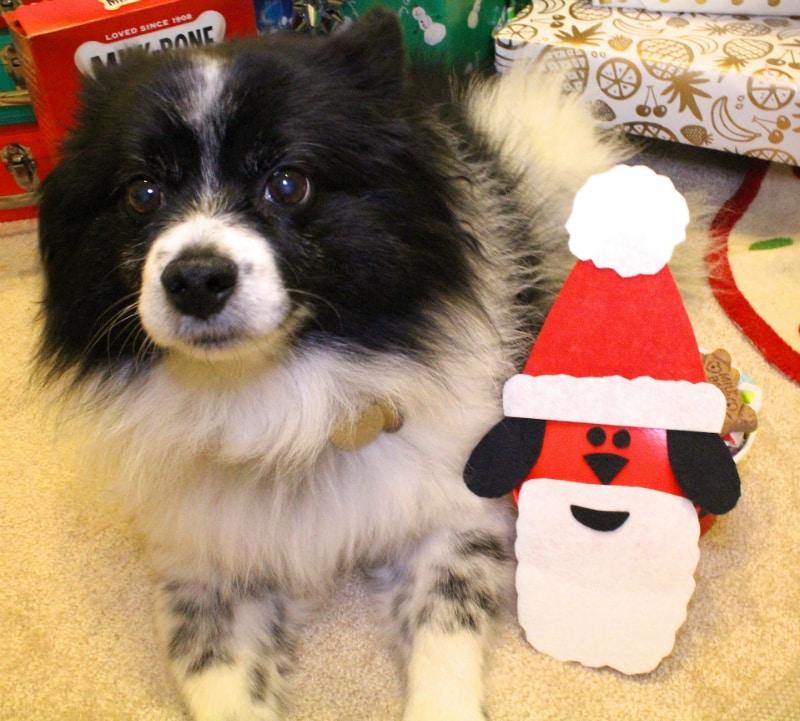 DIY-Santa-Dog-Gift-6