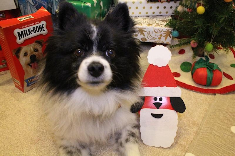 DIY-Santa-Dog-Gift-7