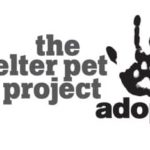 Great Pets for Adoption at The Shelter Pet Project! #ShelterPets #LBC