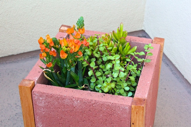 DIY-PAVER-PLANTER-Step-5