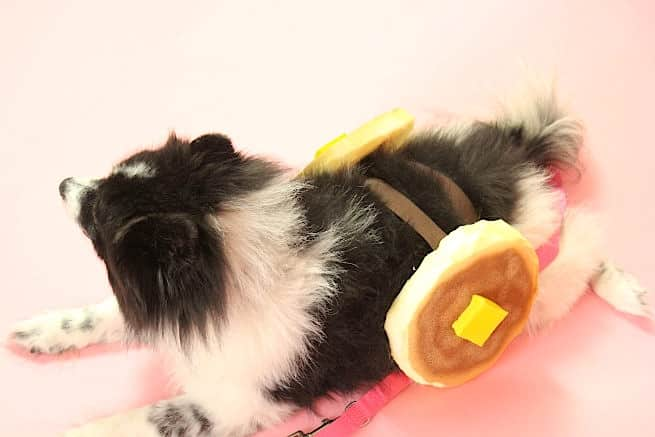 DIY Dog Pancake Halloween Costume-Step-2