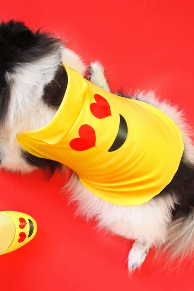DIY-Emoji-Halloween-Dog-Costume-1