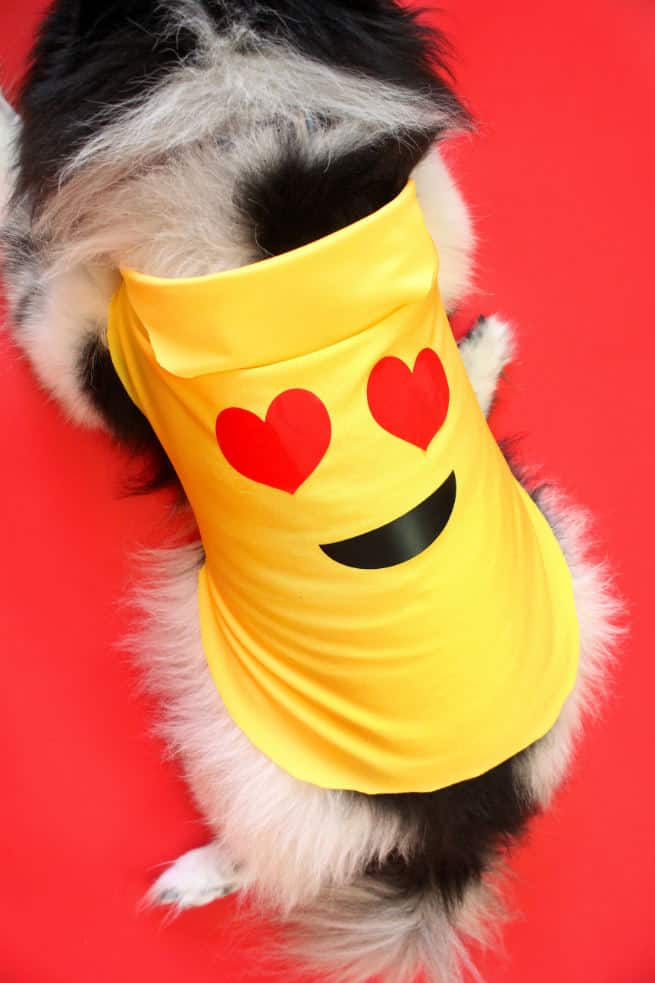 DIY-Emoji-Halloween-Dog-Costume