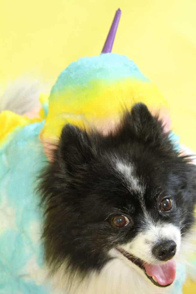 DIY-Rainbow-Cotton-Candy-Dog-Costume-Mr.Pink-1