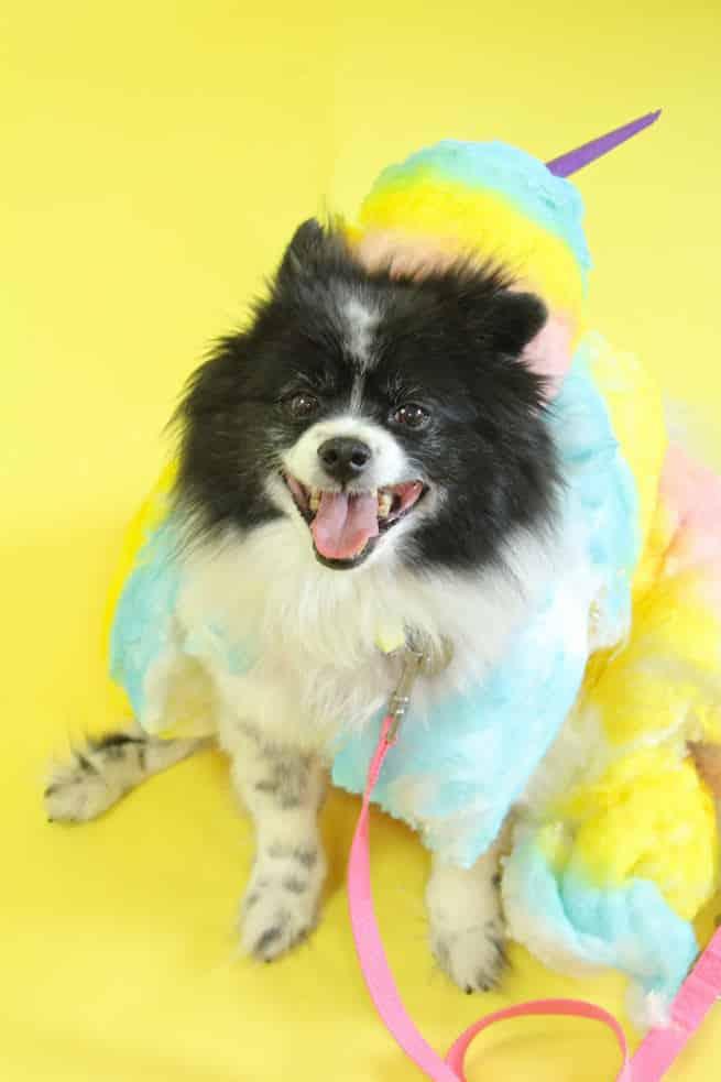 DIY-Rainbow-Cotton-Candy-Dog-Costume-Mr.Pink