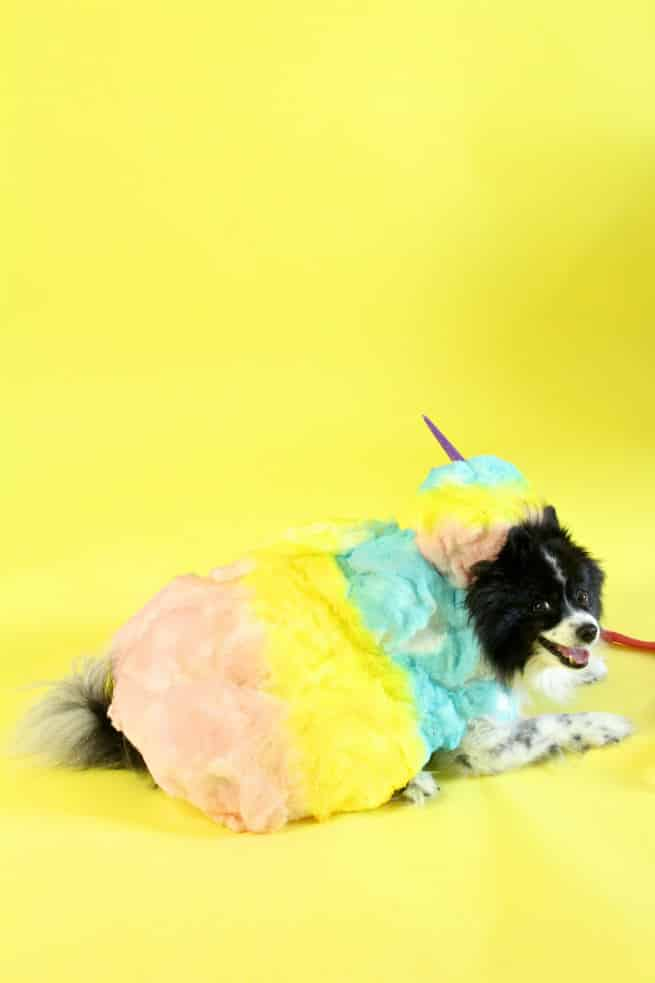 DIY-Rainbow-Cotton-Candy-Dog-Costume